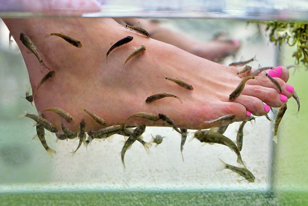 fish-sante